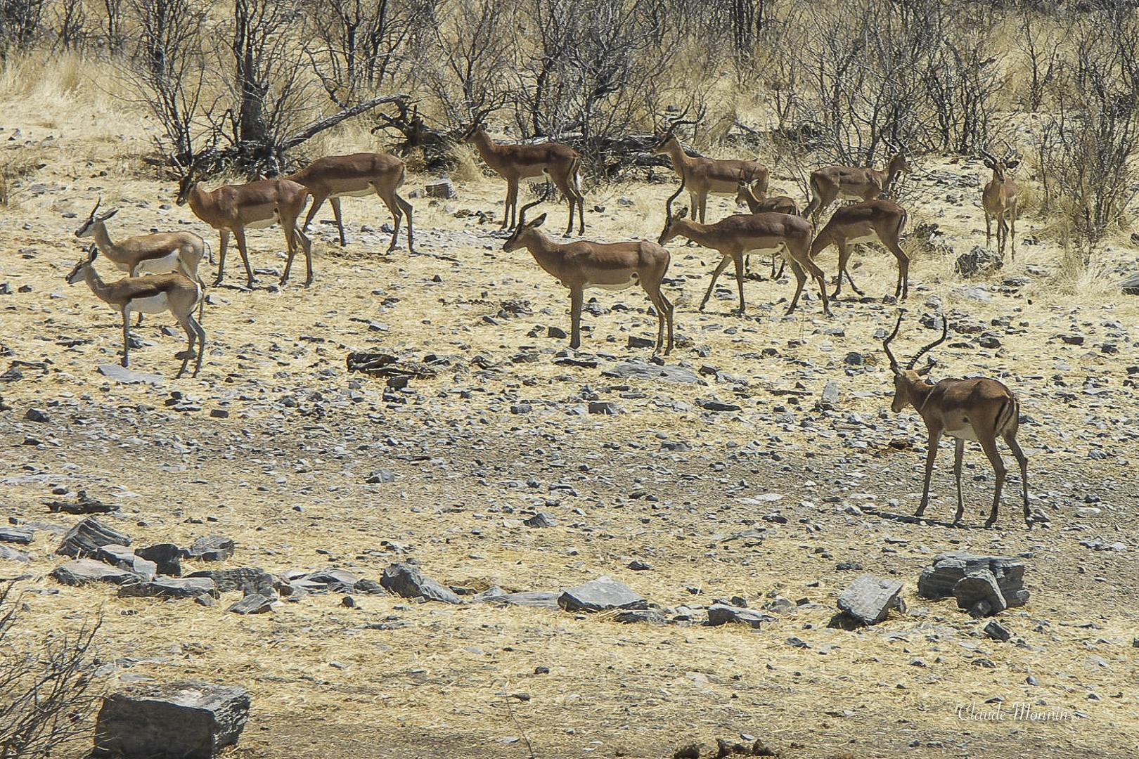 Afrique 1 349Namibie