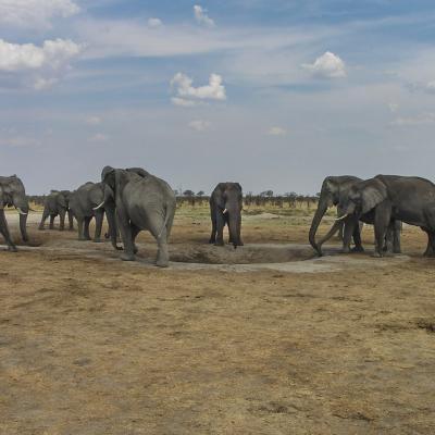 Afrique 2 049Botswana