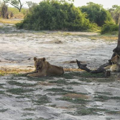 Afrique 2 075Botswana
