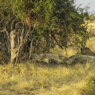 Afrique 2 080Botswana