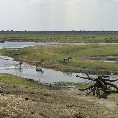 Afrique 2 149Botswana