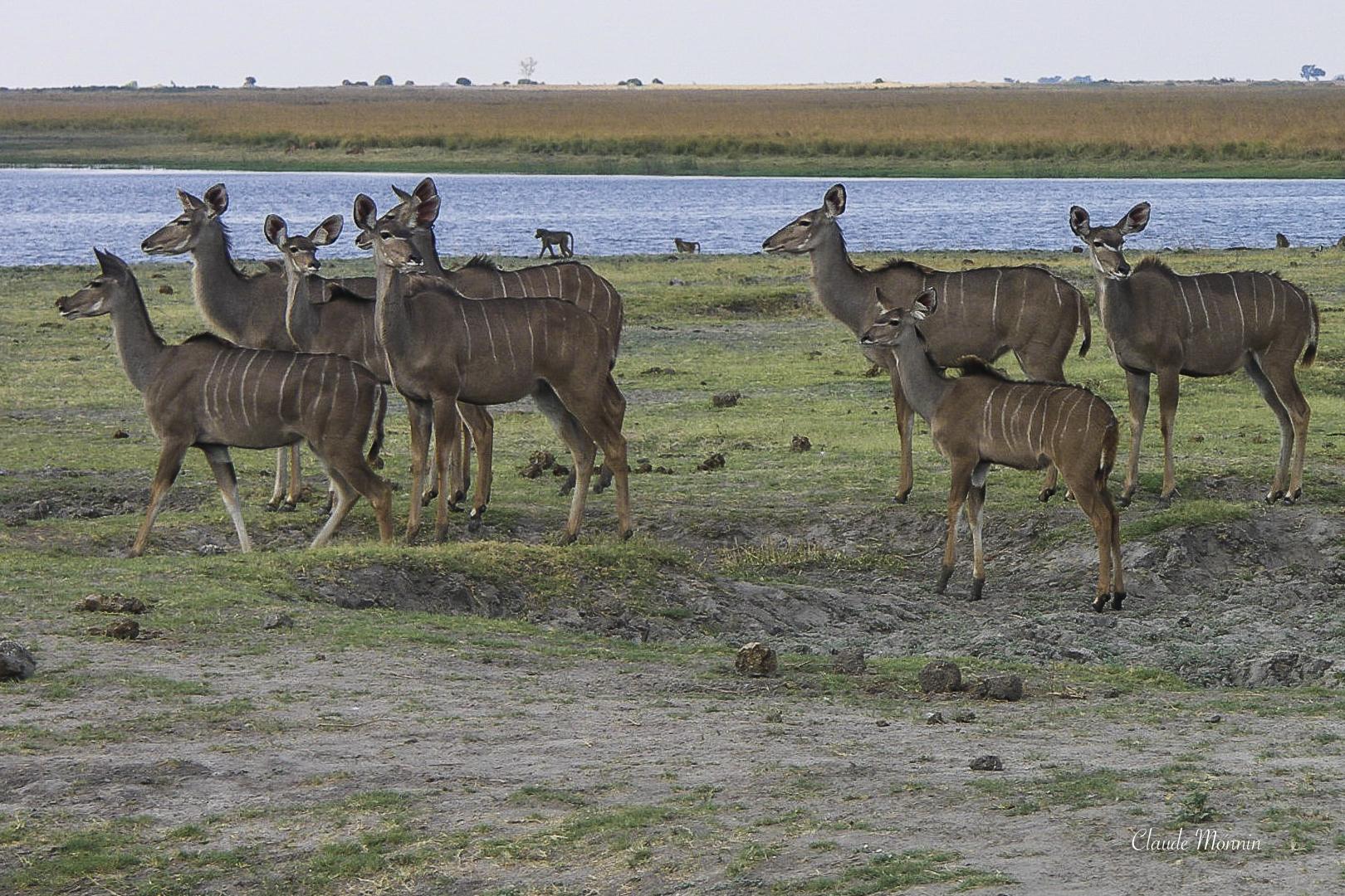 Afrique 2 183Botswana