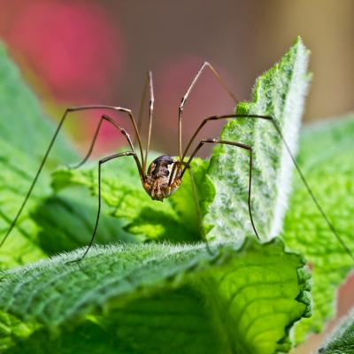 Araignée (4)