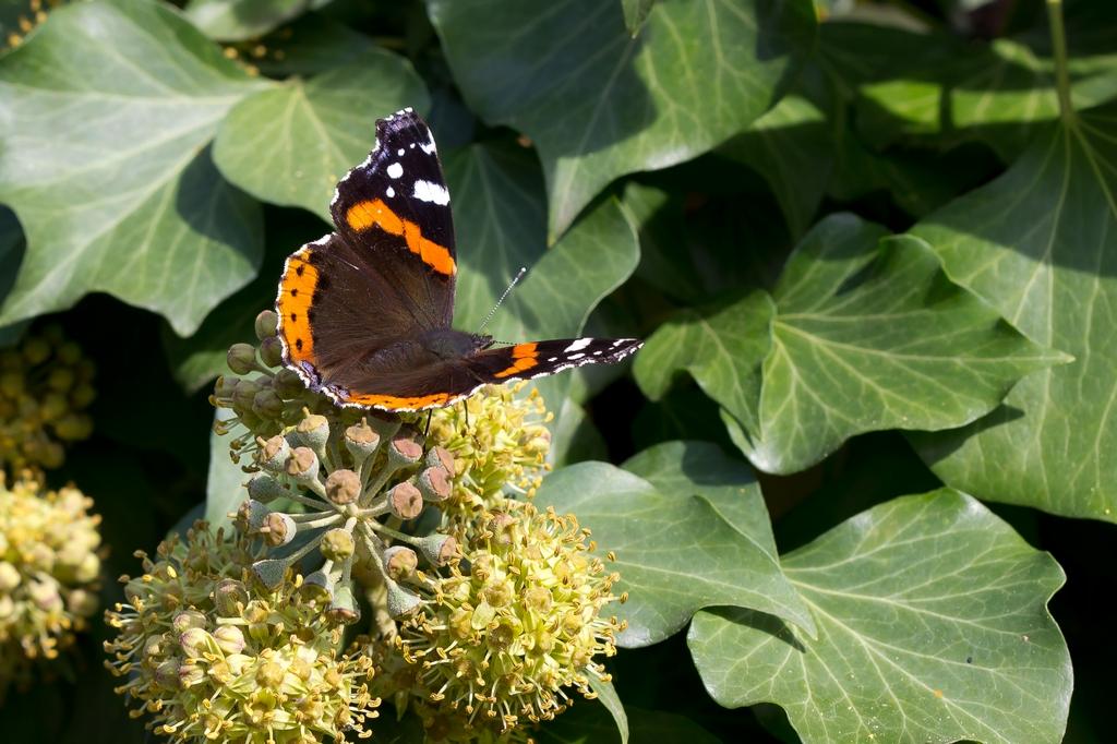 Chenille papillon (3)