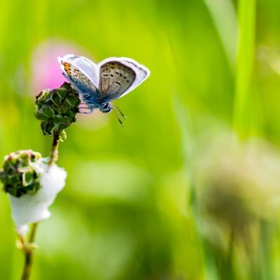 Chenille papillon (9)