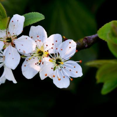 Flore (2)