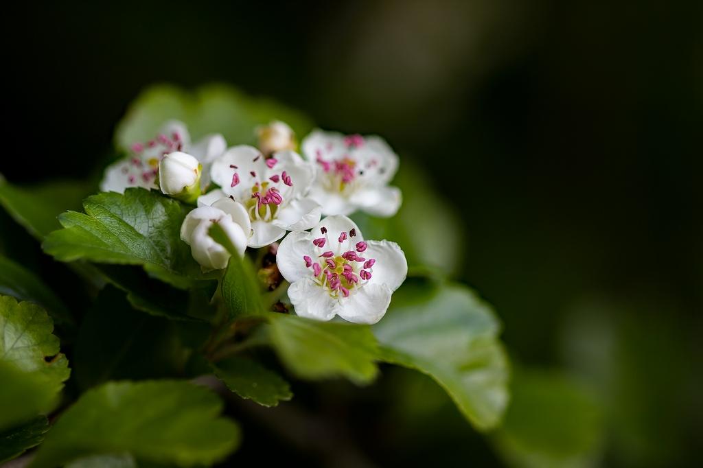 Flore (3)