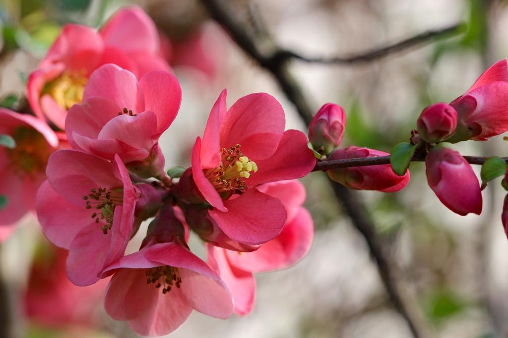 Flore (8)