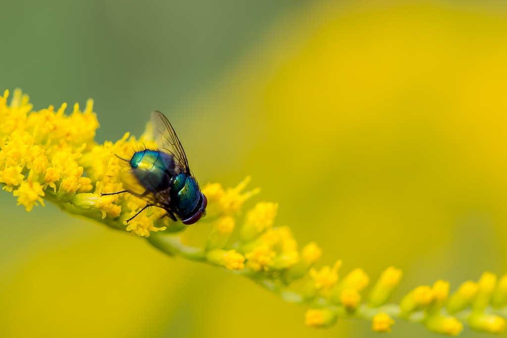 insectes (10)