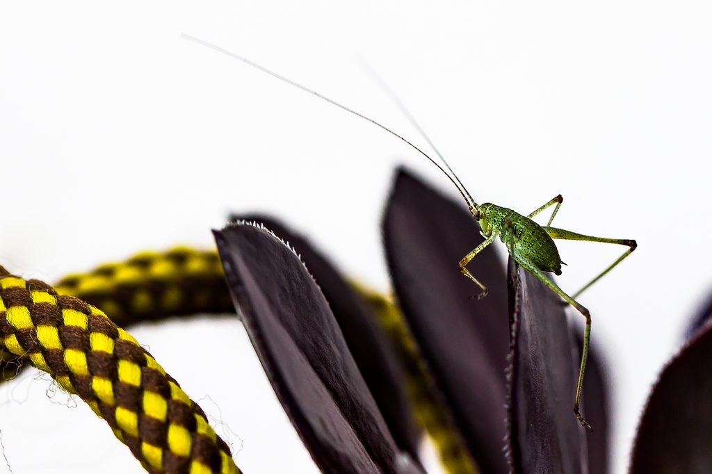 insectes (13)