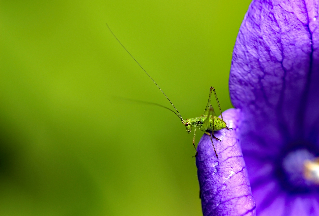 insectes (14)