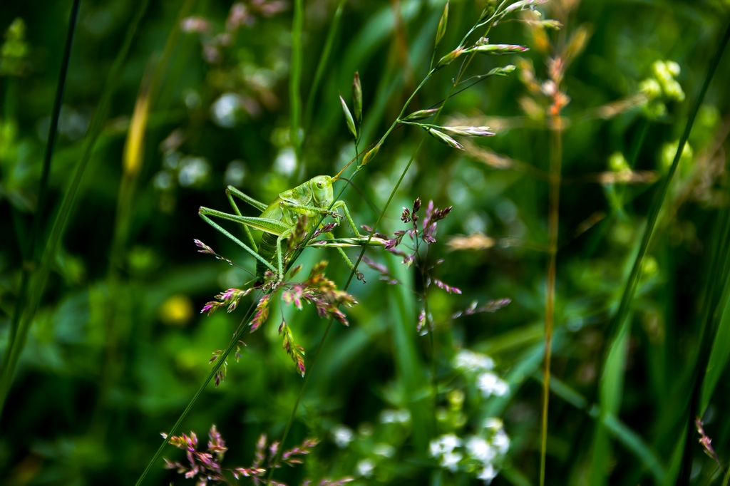 insectes (17)