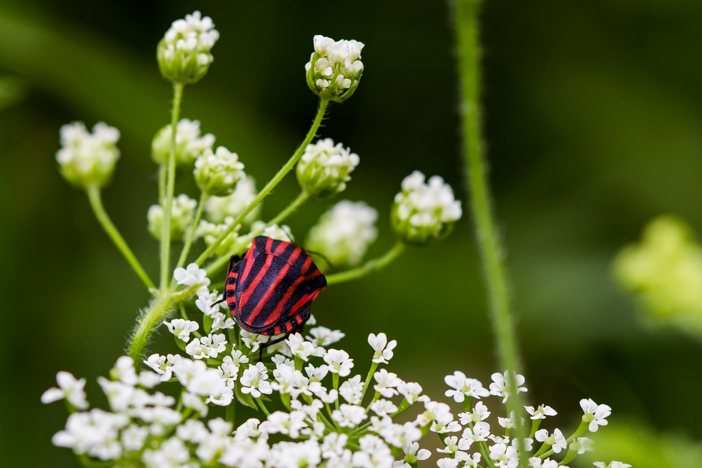 insectes (5)