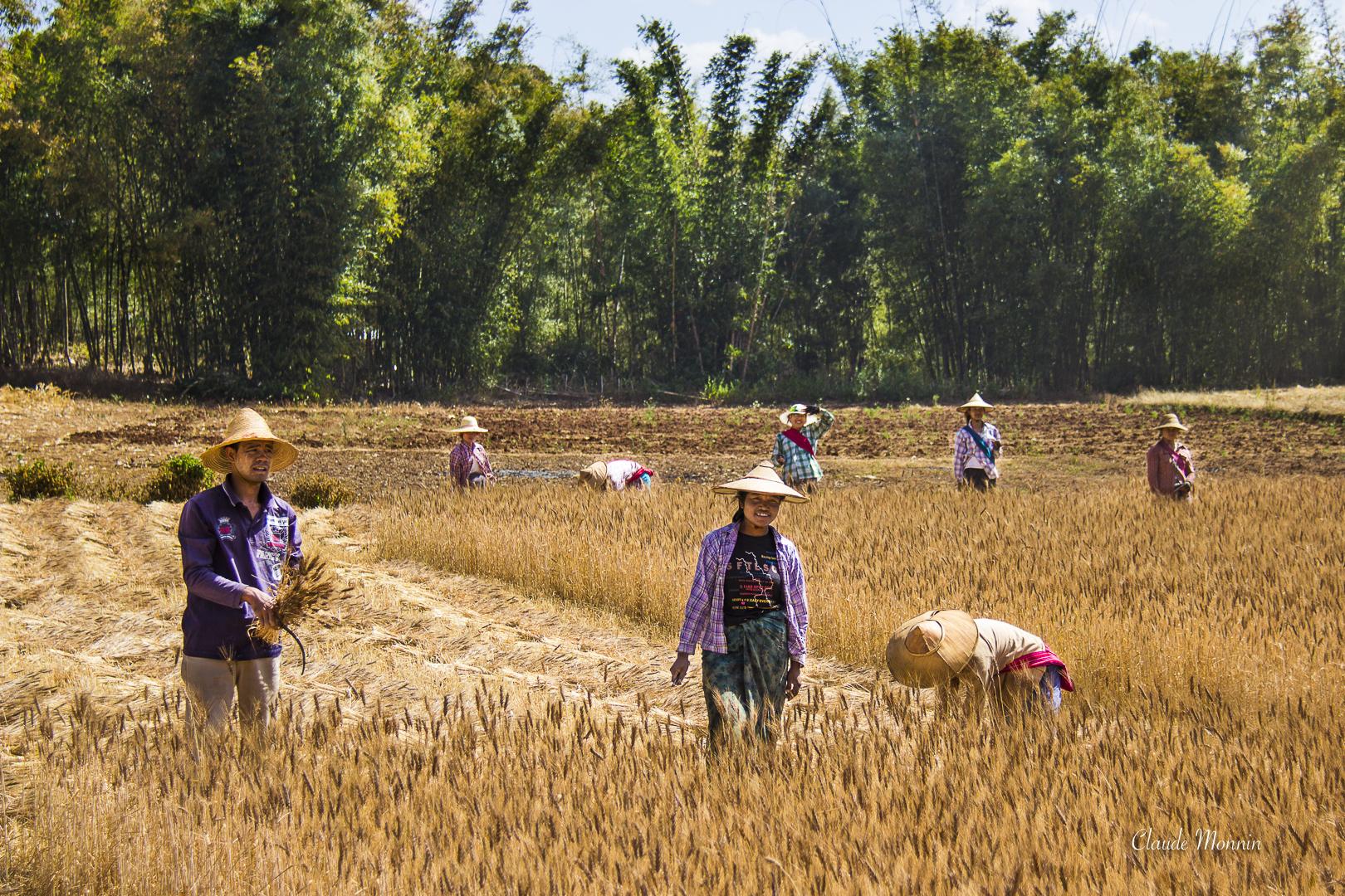 Myanmar7725