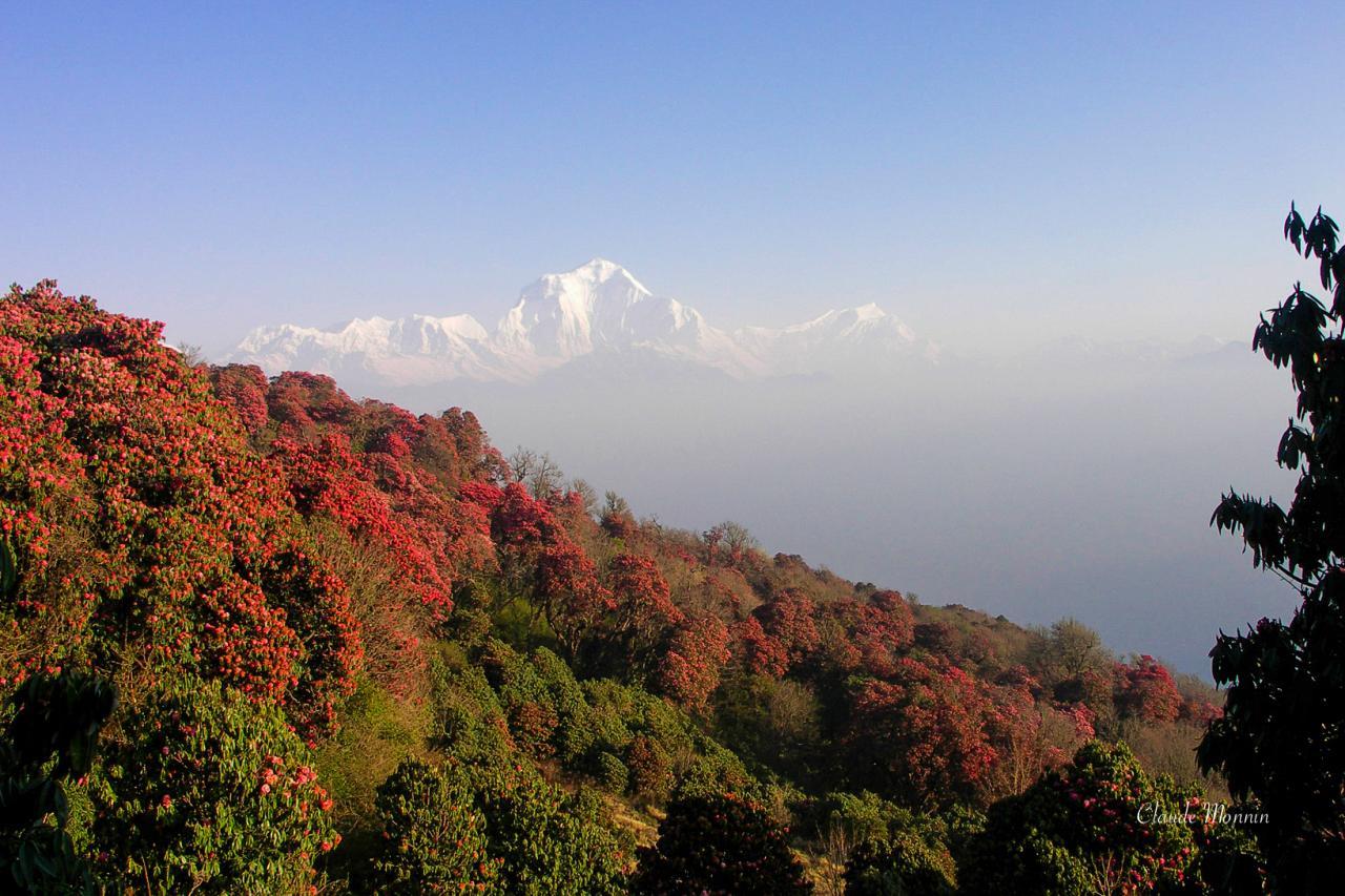 Népal0680
