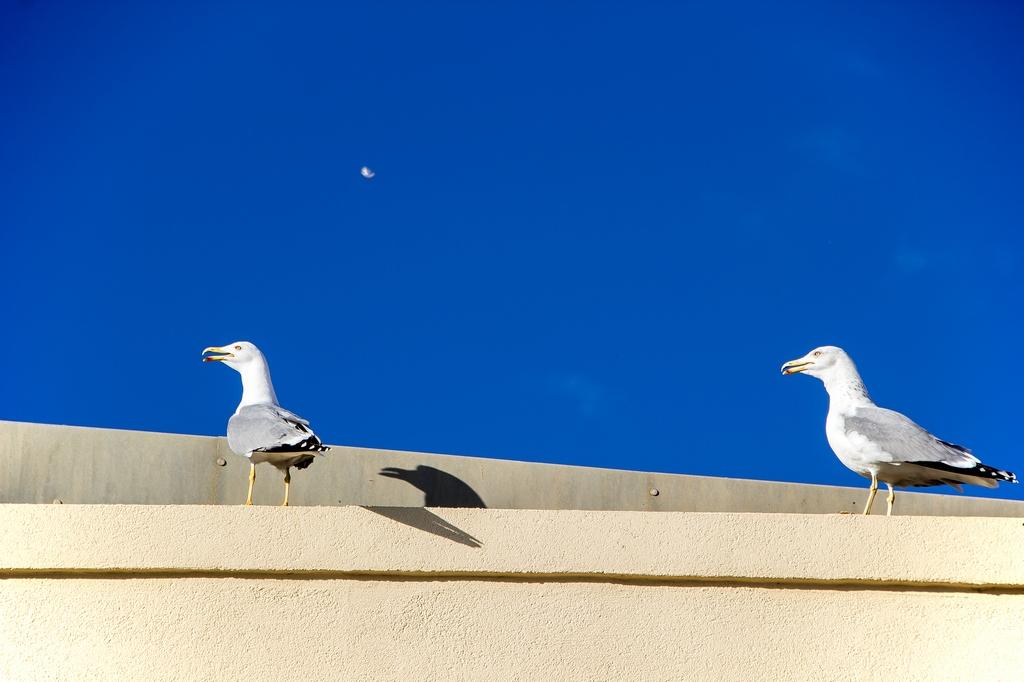 Oiseaux (1)