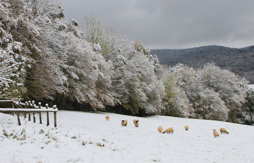 Paysage de neige_01