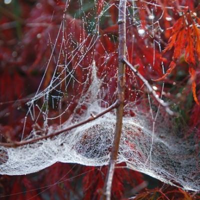 Toile araignée_01